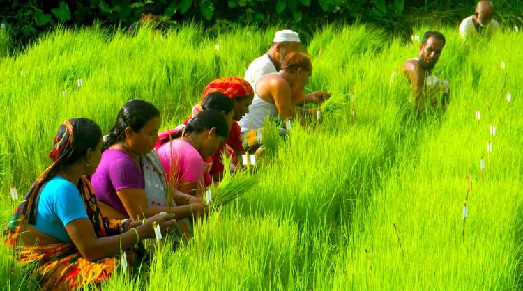 Nayakrshi farmars