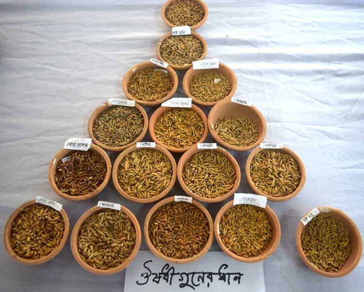 Medicinal Rice