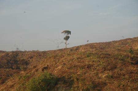 Denuded Hills