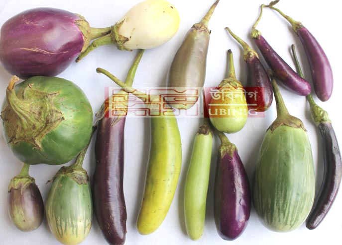 local Brinjal
